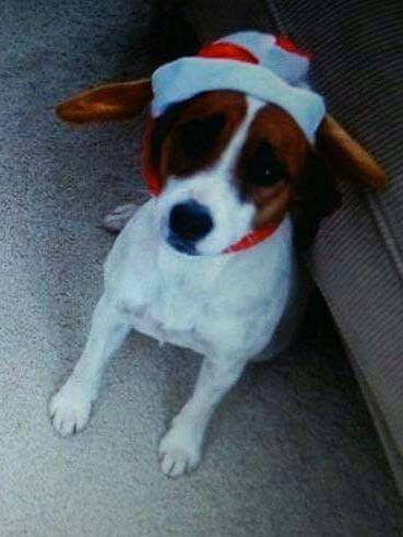 'We will not give up hope until she's found' say owners of missing Jack Russell https://t.co/ispQvxUlWU https://t.co/YMDmWW99eS