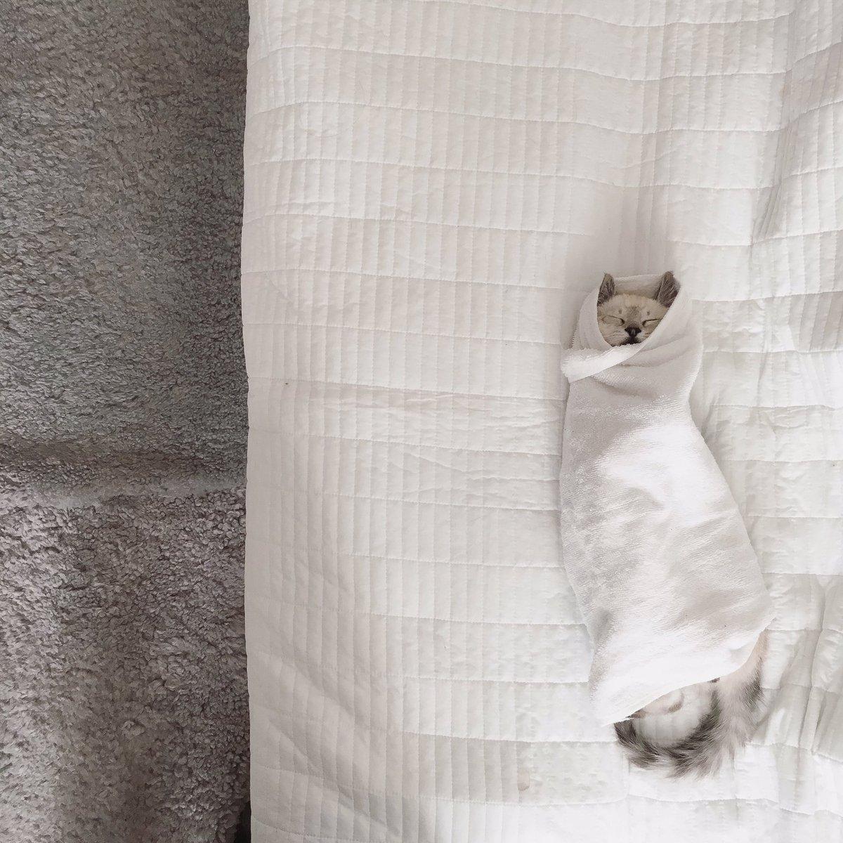 お包みをして、目薬をさしてイイコイイコしてたらそのまま寝ました。( ˘ω˘ )スヤァ… pic.twitter.com/PE2cjtPaqq