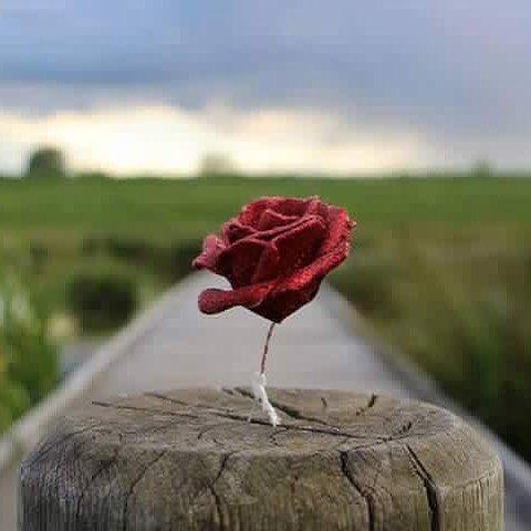 ستشعر بجمال الحياة عندما تجعل لكل يوم صفحه جديدة وتترك الماضي بأعبائه...