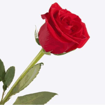 happy birthday ....dear Hrithik Roshan......may god bless u......