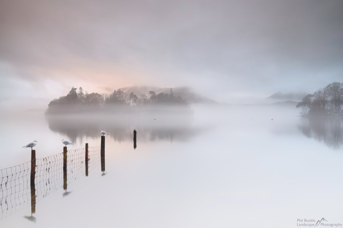Three little birds make this misty shot from @PhilBucklePhoto a #WexMondays standout https://t.co/eGgWGYMl0M