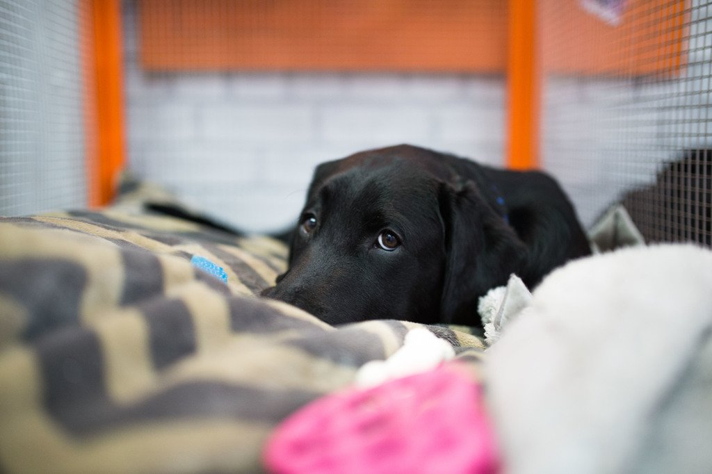 Waking up is ruff. #TODAYPuppy