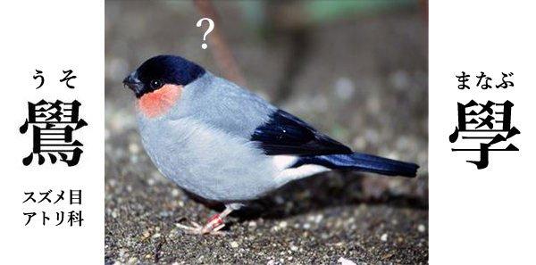 鷽(ウソ)の字は、學問の學(ガク、まなぶ)とも似ています。学問の神様である天神さまゆかりの鳥でもあり…