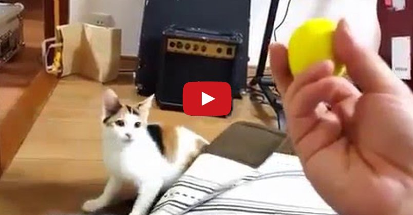 Cat Appears Instantly On Cue CLICK to watch >