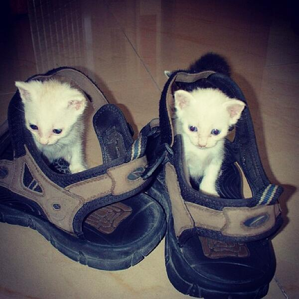 Double trouble puss in ....sandals!?