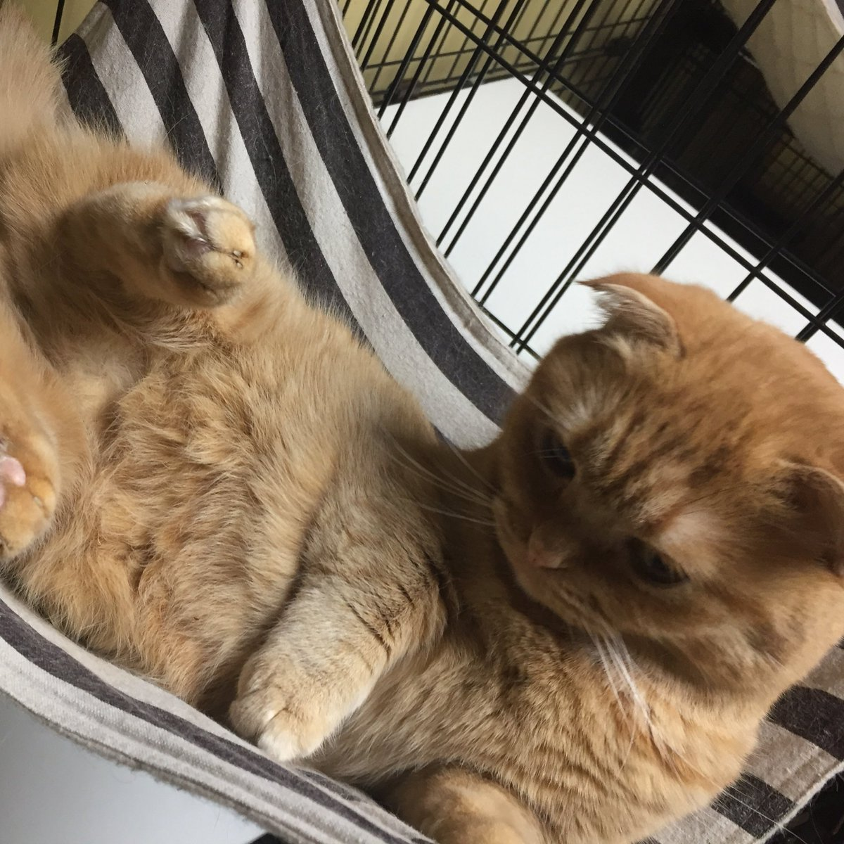 ウニちゃんハンモックで寝っ転がってお休みの日をご機嫌に満喫しています。好きなのよね、ハンモック。