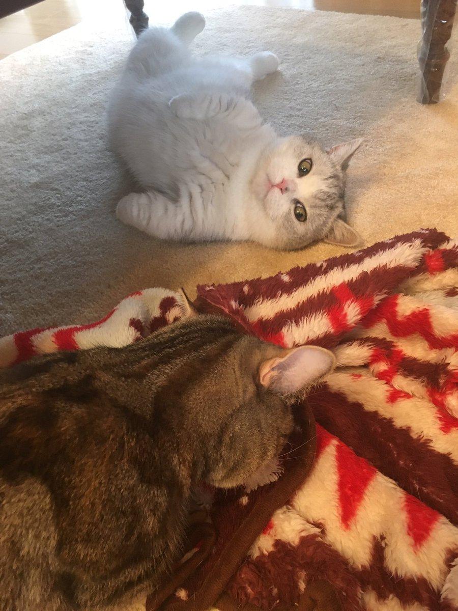 朝からフミフミに必死なお姉ちゃんを見守る弟が可愛くて撮ったらすごい顔だった😭人面猫😭 本当はもっとか…