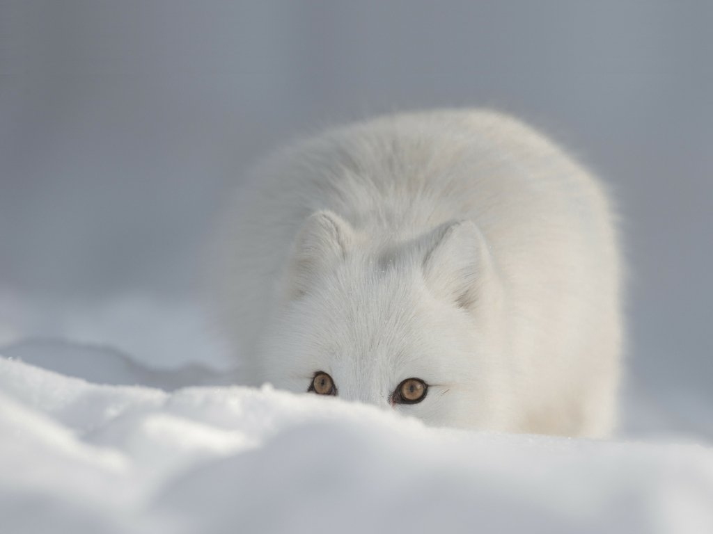 Arctic camouflage. #wildlife #travel <br>http://pic.twitter.com/aKZak1hDwK