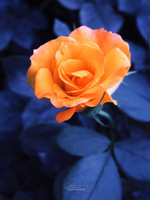 Ub2f9uc2e0uc744 Uc704ud55c Uc7a5ubbf8 (@for_your_roses) | Twitter