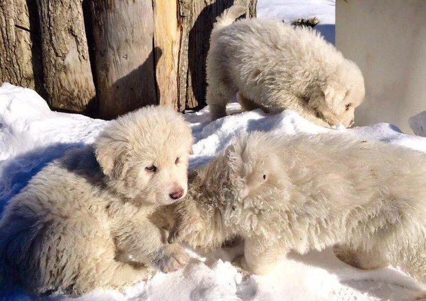 #Rigopiano Si scava ancora. Trovati vivi tre cuccioli https://t.co/NxOh6vY3kl