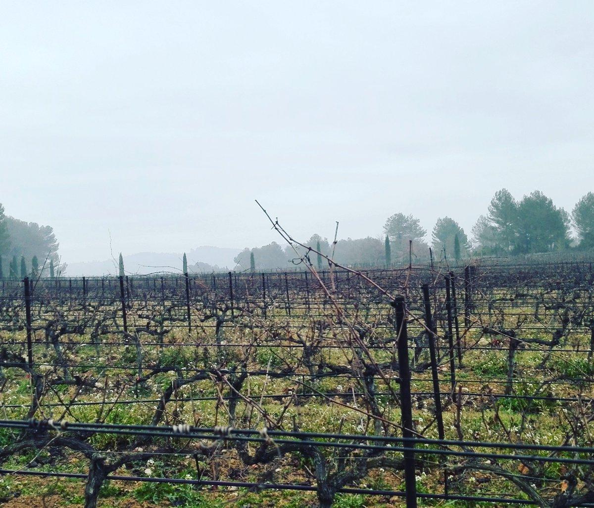 La taille de nos vignes a commencé depuis début Janvier, et ça continue encore &amp; encore #vignoble #vineyard #vignes #vines #taille #pruning<br>http://pic.twitter.com/RMUC1uKWYc