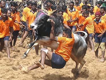 #BREAKING: Tamil Nadu assembly passes #jallikattu bill  http:// rediff.ly/68lp7  &nbsp;  <br>http://pic.twitter.com/FdSsr8qBxI