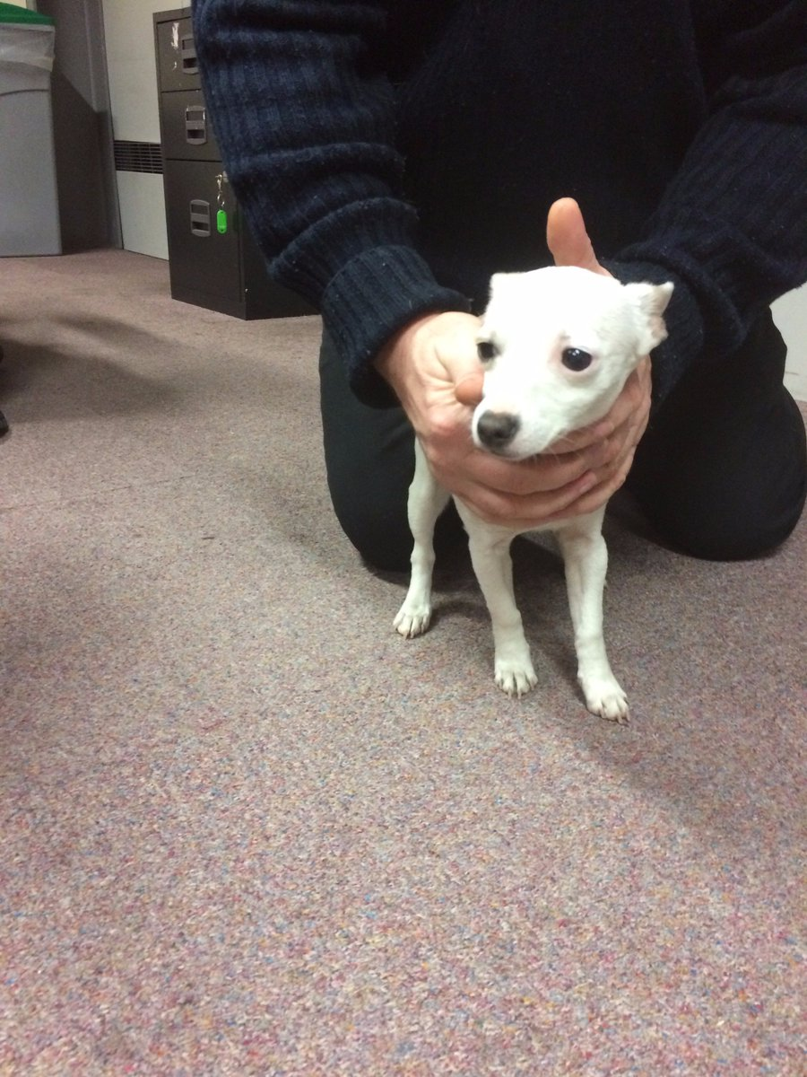 Dog found running on the M50 and has been handed into Luas Red Cow Depot, please share https://t.co/yjjbr5TRZR