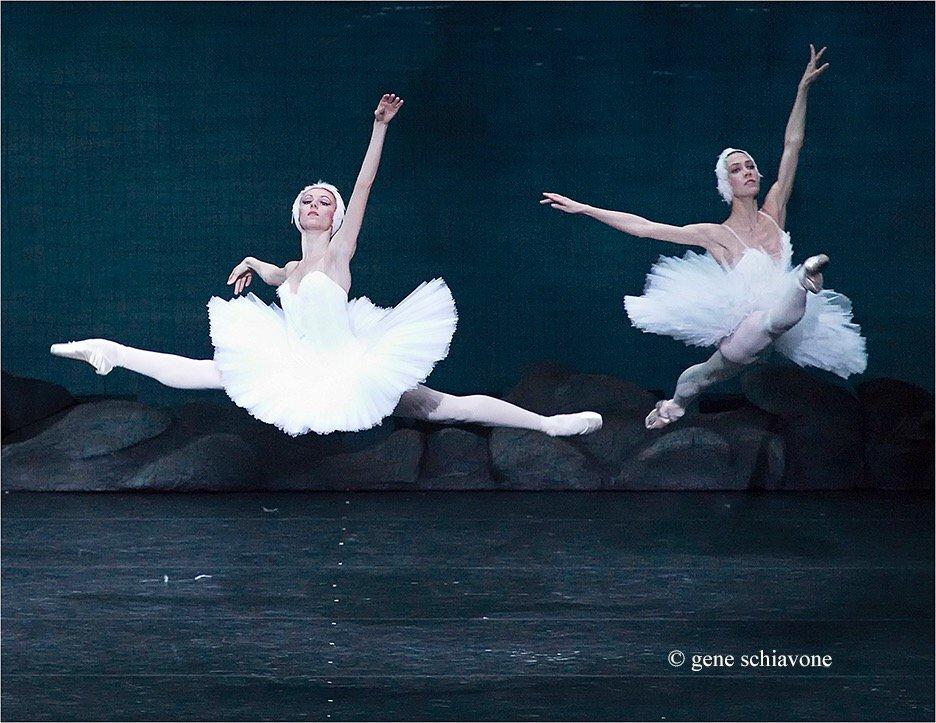 Mariinsky Swans - #art #ballet https://t.co/Y7mL6WivNM