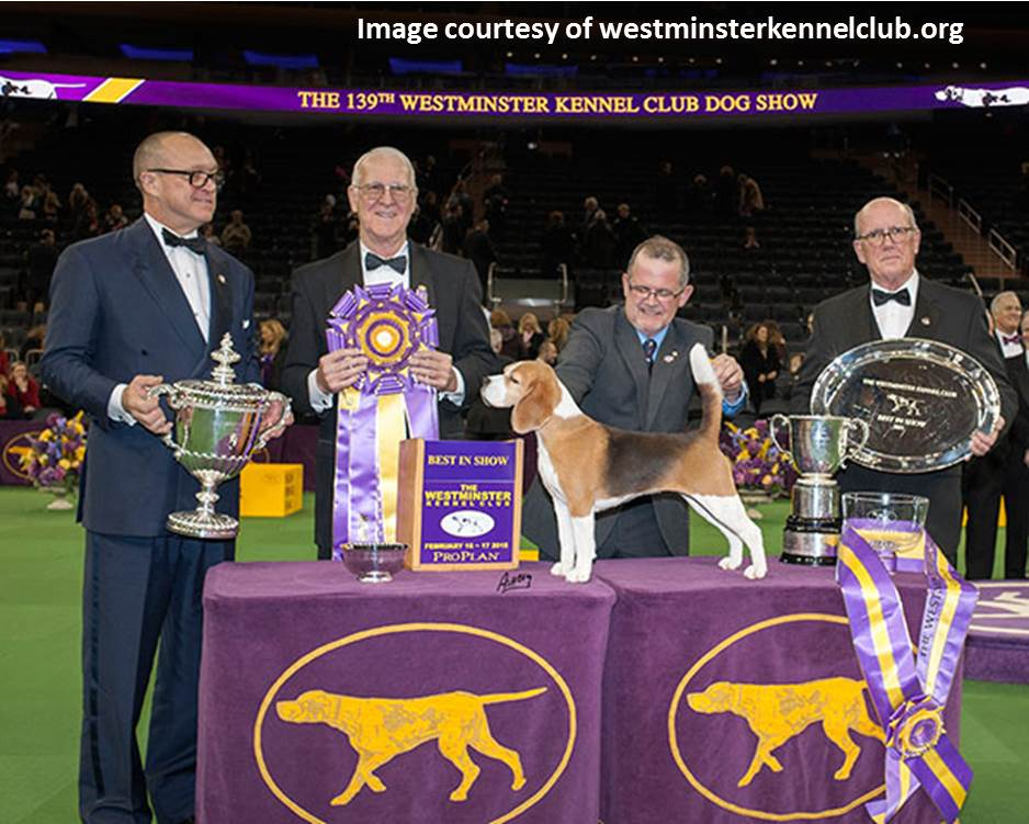 Image result for images of the westminster kennel club dog show 2017