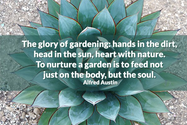 RT https://t.co/mJNNXHHrig Ah yes ... nature feed the soul! #gardening...