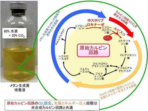 生命40億年・教科書の常識が根底から覆る…光合成、すでに太古の細菌が完成させていた 神戸大と奈良先端…