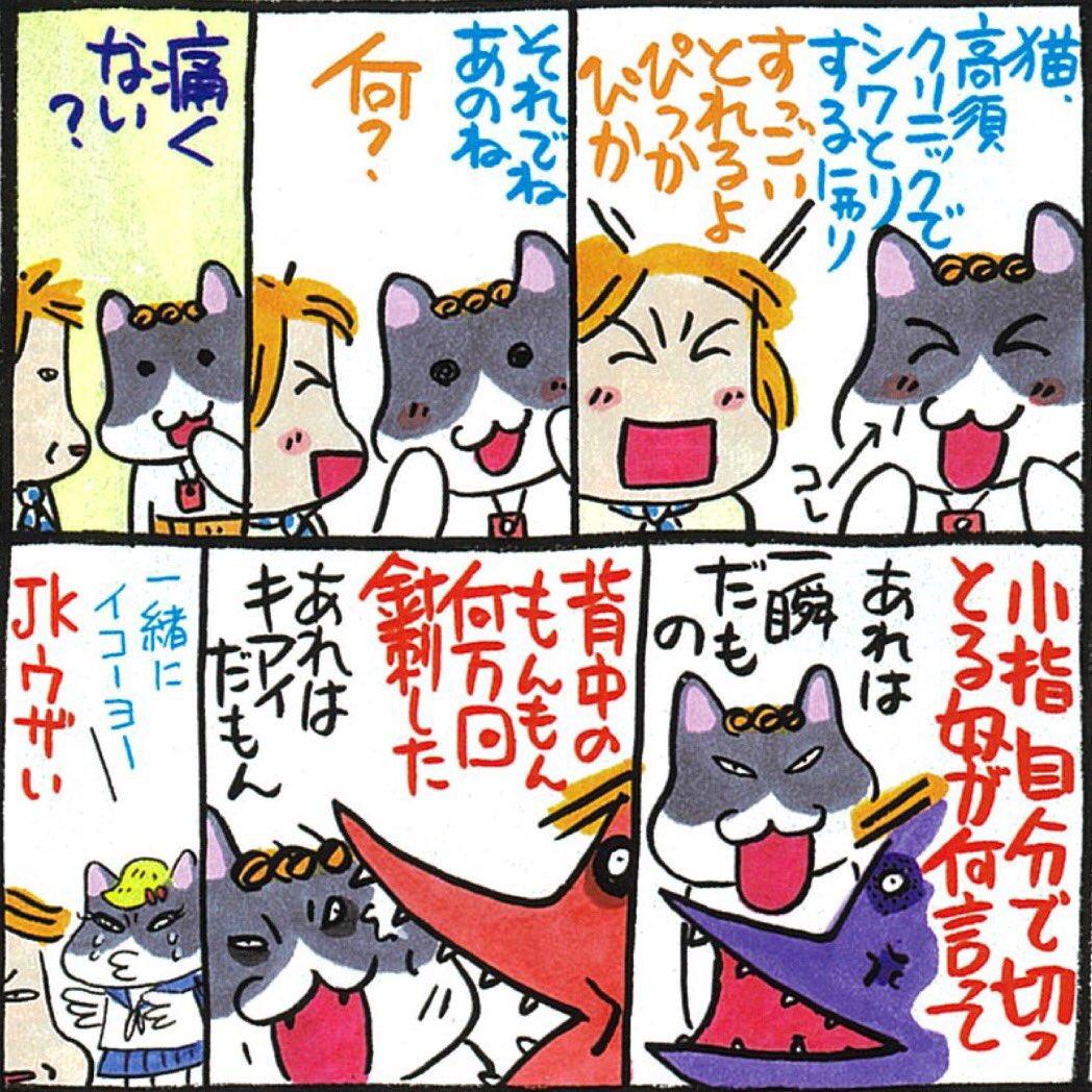 組長 nekokumicho 猫