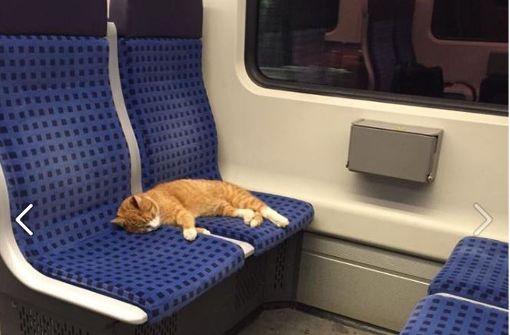 Ungewöhnlicher Fahrgast in #Stuttgart: Süße Katze fährt alleine S-Bahn https://t.co/uVLqWKefKy