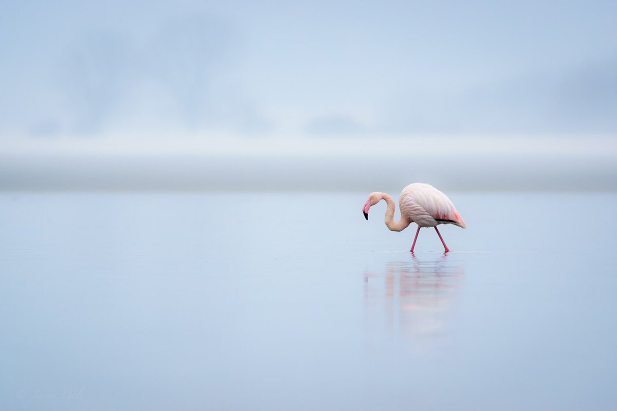 We love this flamingo capture by @onelittleduck! A #WexMondays shortlister for sure https://t.co/VAlXqo4mdm