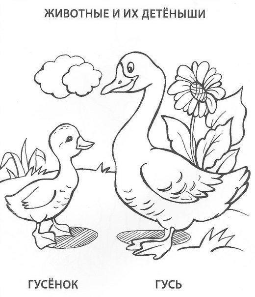 раскраски животные для дошкольников