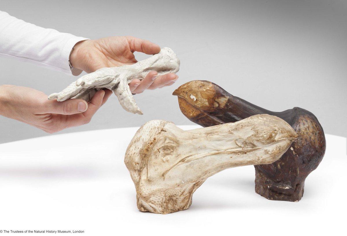 Großartig Anatomie Museum Philadelphia Galerie - Anatomie Von ...