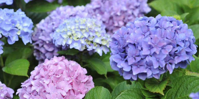 10 Surprising Things You Didn't Know About Your Garden https://t.co/hx...