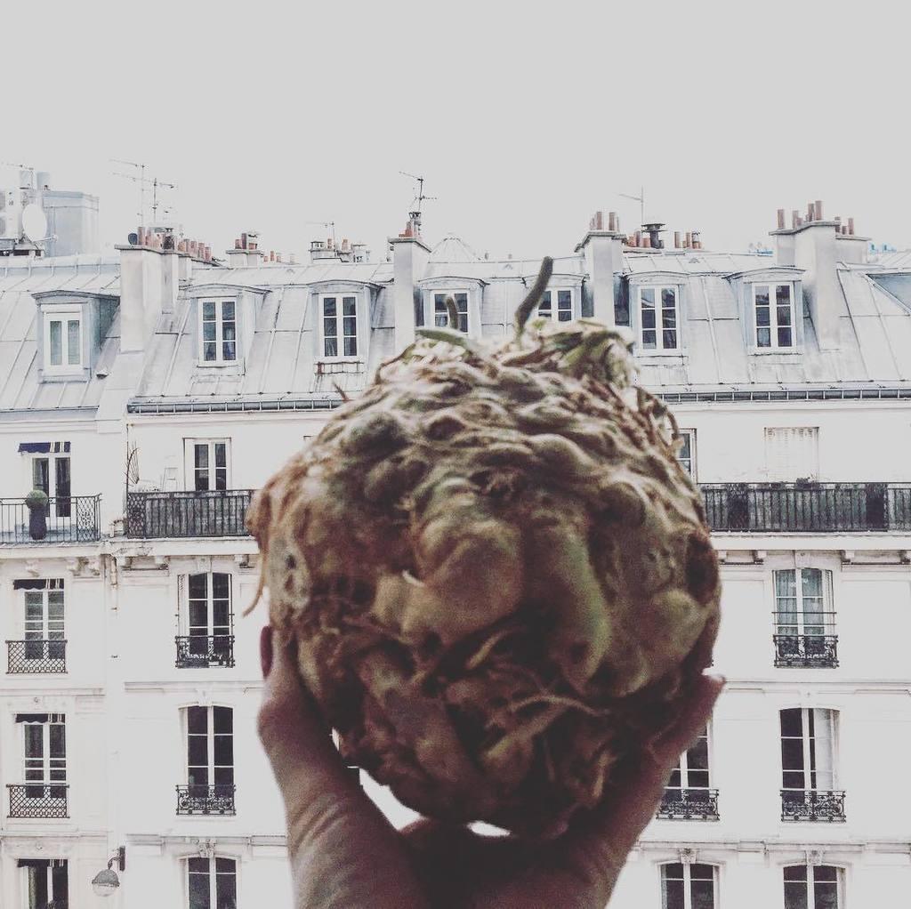 Celeriac. The Humble Root -> https://t.co/01OsuD7pRq #urbangarden #...