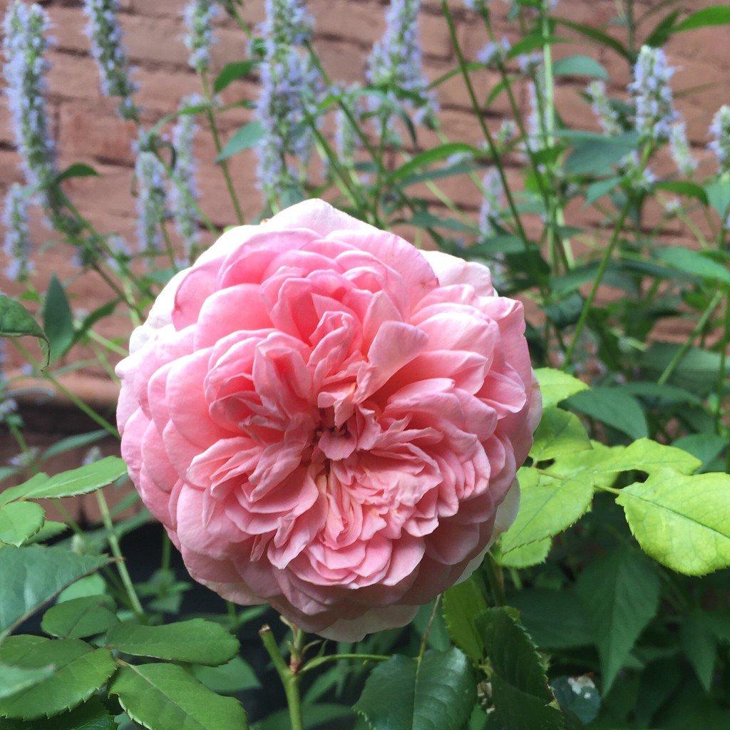 Just the facts by Elizabeth Licata https://t.co/EYbxAjtDiG #gardening...