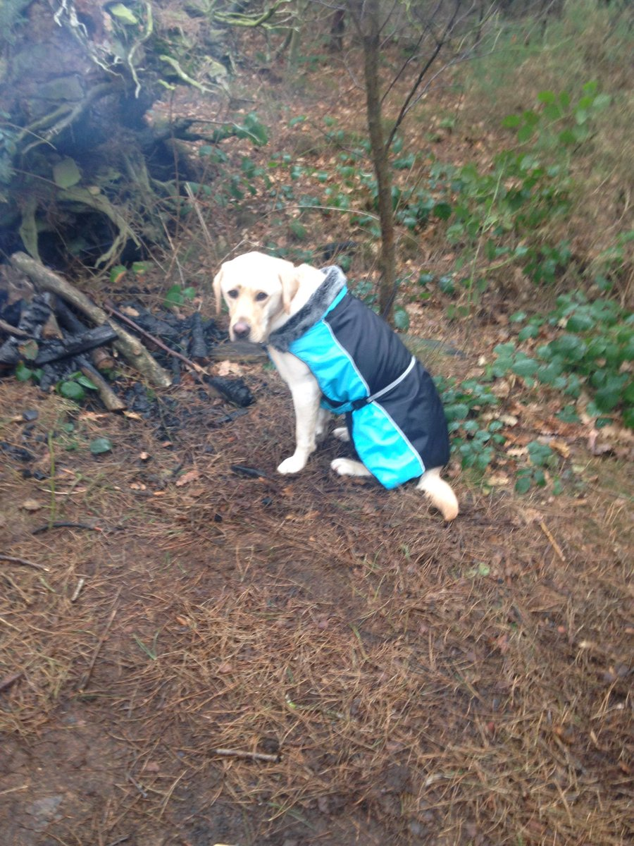 Beautiful Barney, our gentle and playful school companion dog, modelling his winter coat in the forest. #forestschool <br>http://pic.twitter.com/8UAPM1t0F3