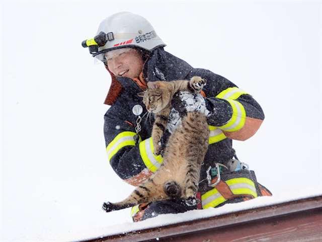 吹雪で屋根から下りられニャい 由利本荘、消防署員が猫救出 https://t.co/2VV7b9TPk4 #akita https://t.co/gcTLe8GFBL