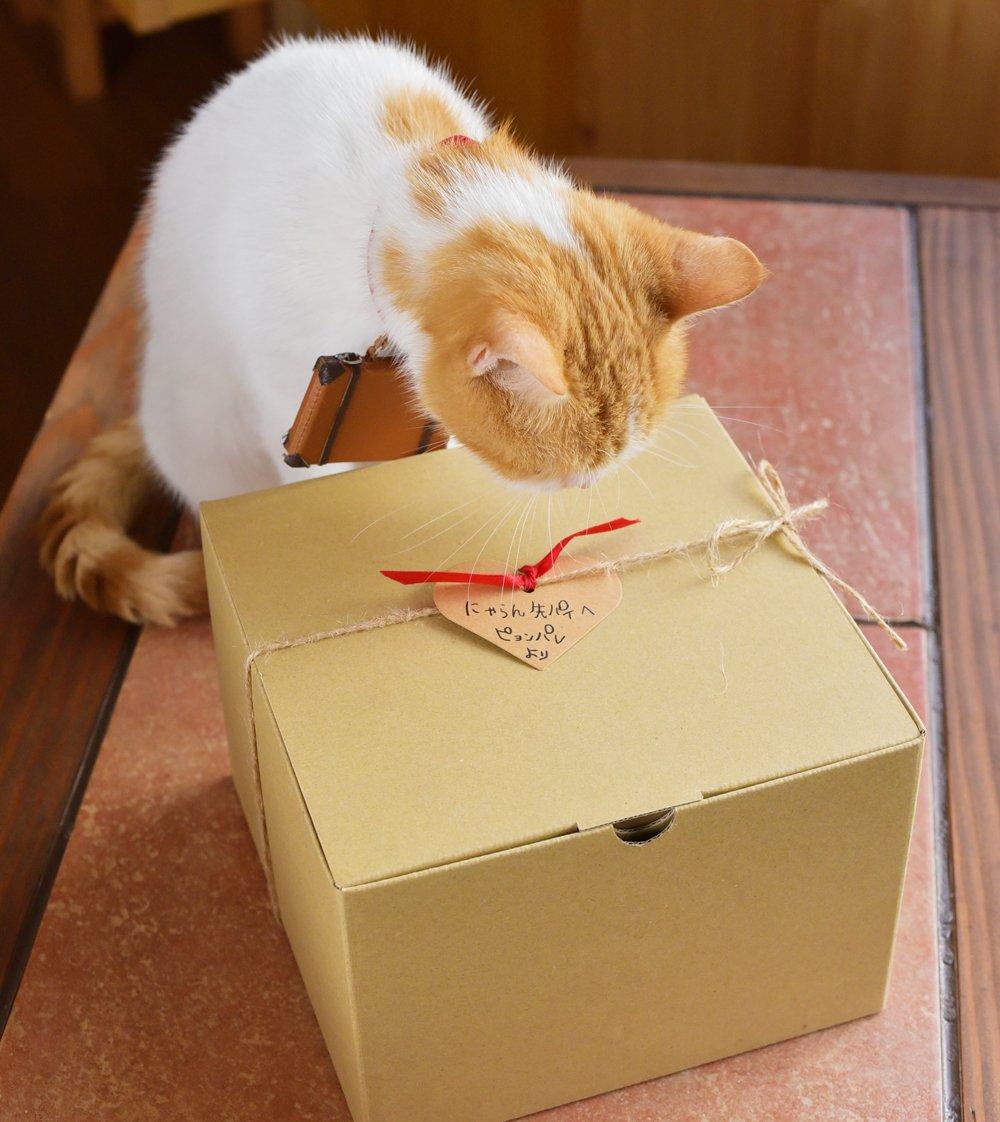 подарить коту ничто