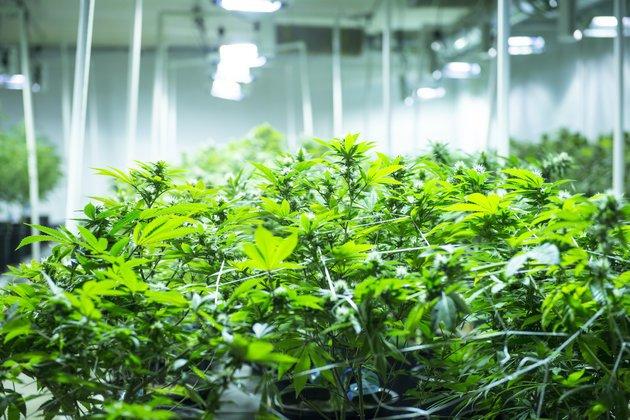 Un #estudio que demuestra la influencia del #cannabis para reducir el #dolor  http://www. huffingtonpost.com/entry/marijuan a-health-benefits-study_us_58784988e4b0e58057fe27c4 &nbsp; … <br>http://pic.twitter.com/gjDbw0yPVX
