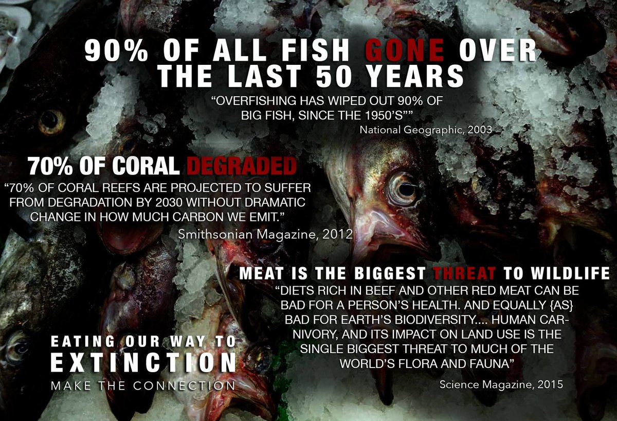 Eating Our Way Through Wisconsin Film_18 >> Fish Feel On Twitter New Film Eating Our Way To Extinction