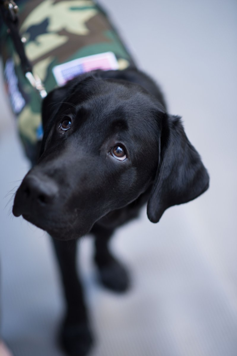 Happy Friday! #TODAYPuppy