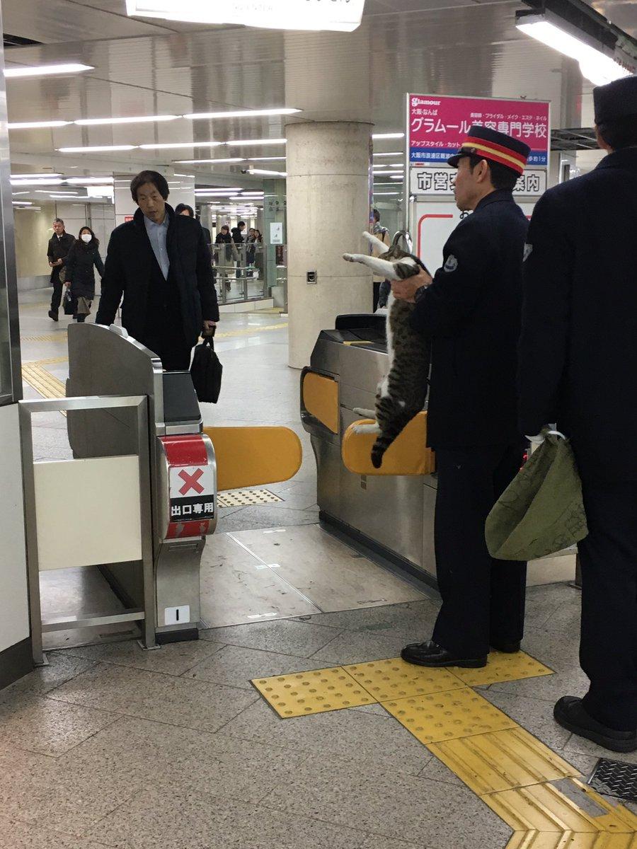なんば駅でねこつかまえられてた pic.twitter.com/i4sieOsUUb