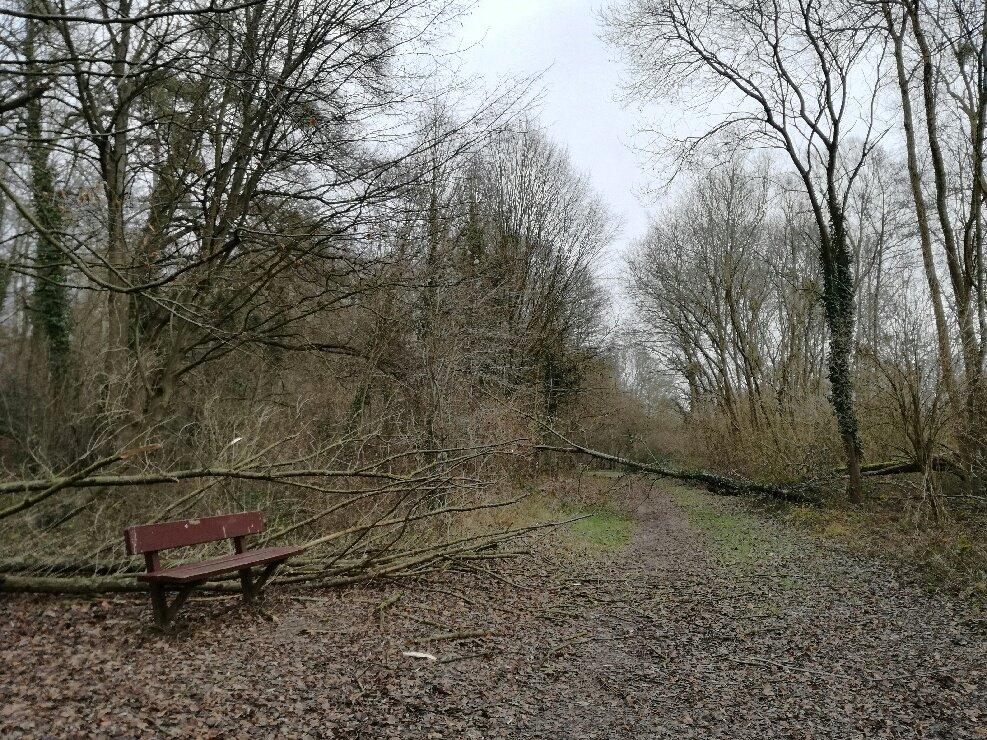 #Intempéries : vigilance en #forêt d&#39;@iledefrance @RegionNormandie @hautsdefrance et #Ardennes   http://www. onf.fr/redirect?oid=5 86d &nbsp; … <br>http://pic.twitter.com/zBmZNS6qzy