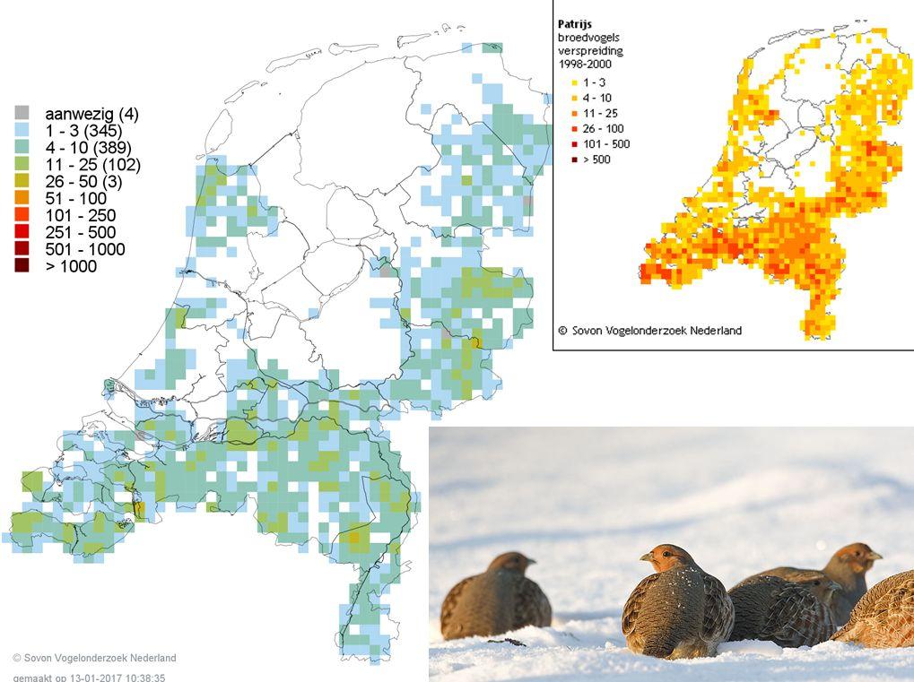 Vergelijk en huiver, inkrimping verspreiding #Patrijs in slechts 15 jaar. #Vogelatlas https://t.co/eWmcEPbv07 https://t.co/k5kl5F0iFQ