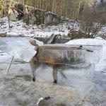 ドイツで極寒の川に落ちたキツネが発見された!