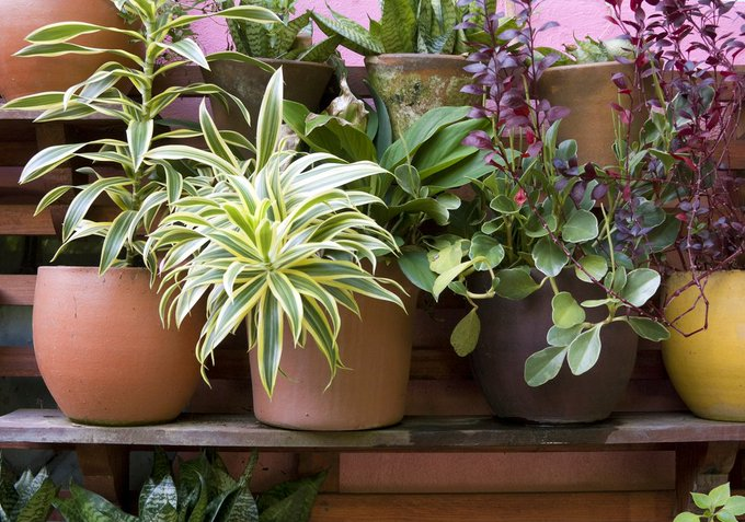 10 Best Houseplants for Improving the Air Quality In Your Home