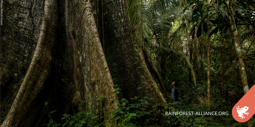 1.6 billion people worldwide depend on #forests for their livelihood. Join us in fighting for them:  http:// bit.ly/2j8xtr3  &nbsp;  <br>http://pic.twitter.com/5DqWu5GoRY