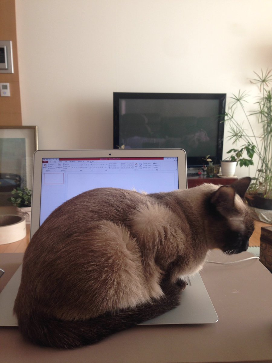 고양이가 노트북을 좋아한다는 건 사실이었다; 매번 열면 와서 앉는다.. ^^;; https://t.co/SMeLekqpS0