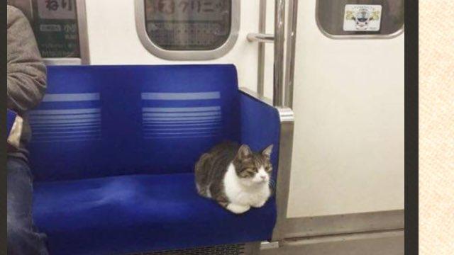 無賃乗車した猫