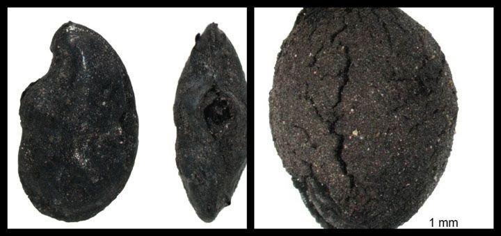 Casser la graine et rembobiner l'histoire...#archéologie #lin #coton #Moyen-Orient  http:// bit.ly/2inHA9E  &nbsp;  <br>http://pic.twitter.com/LojKiGSwFh
