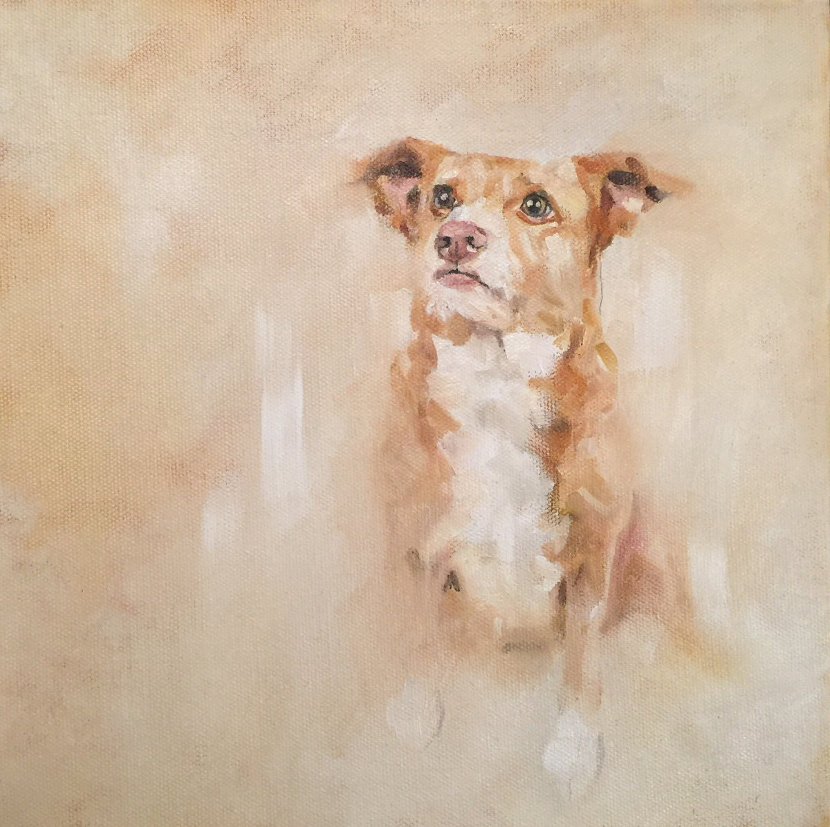 Latest commission &#39;Franzi&#39; 10&quot;x10&quot; oil on canvas reference photo by Tanja Hofer photographe #petortrait #dogsoftwitter <br>http://pic.twitter.com/HYOz6yEqGw