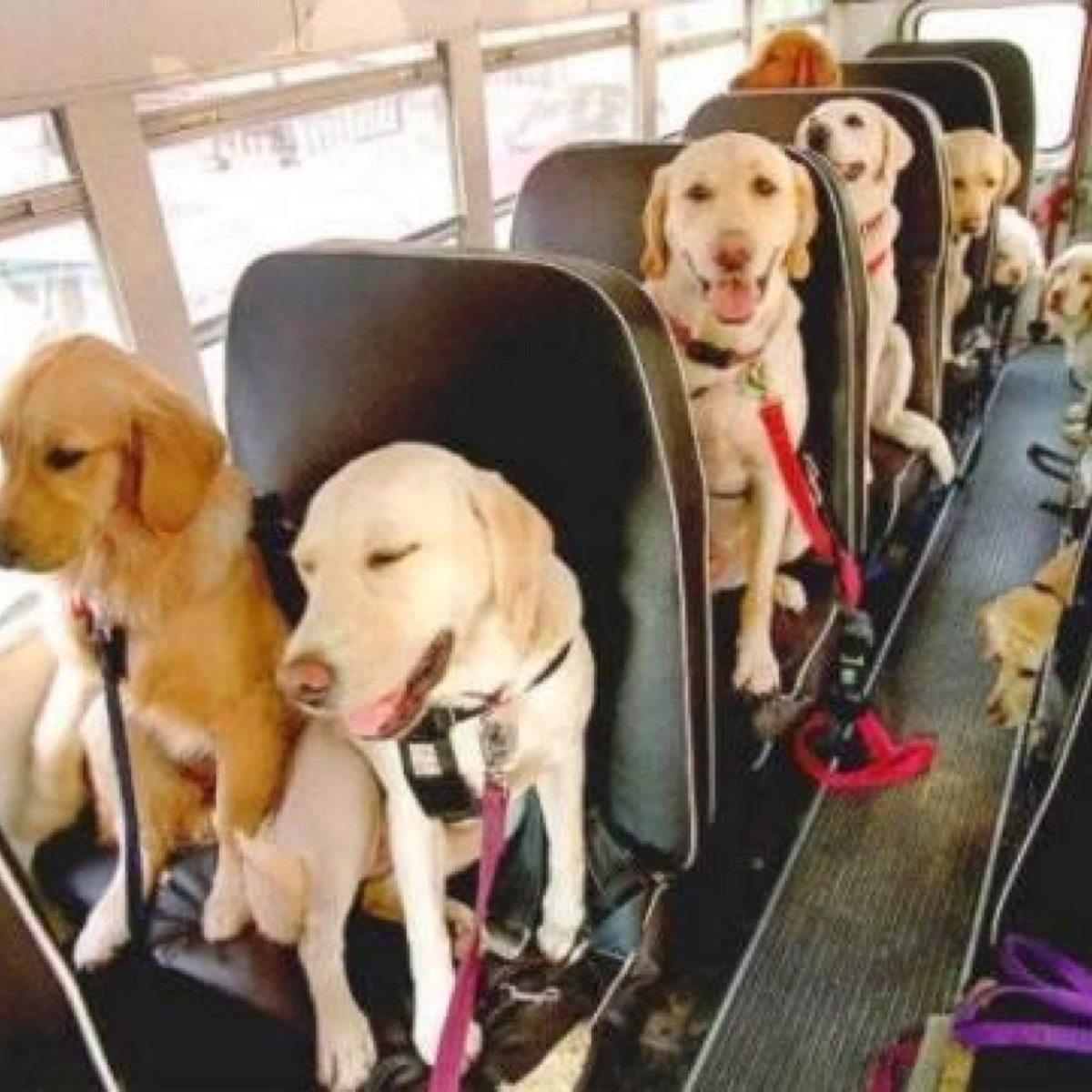 Tour bus designed specifically for dogs launches in London  http:// ow.ly/L6pB3080bM0  &nbsp;   #canine #dogs #doglovers #puppies #animallove #k9 #london<br>http://pic.twitter.com/rNX7sWkeIR