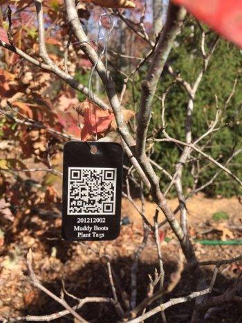 plant tags