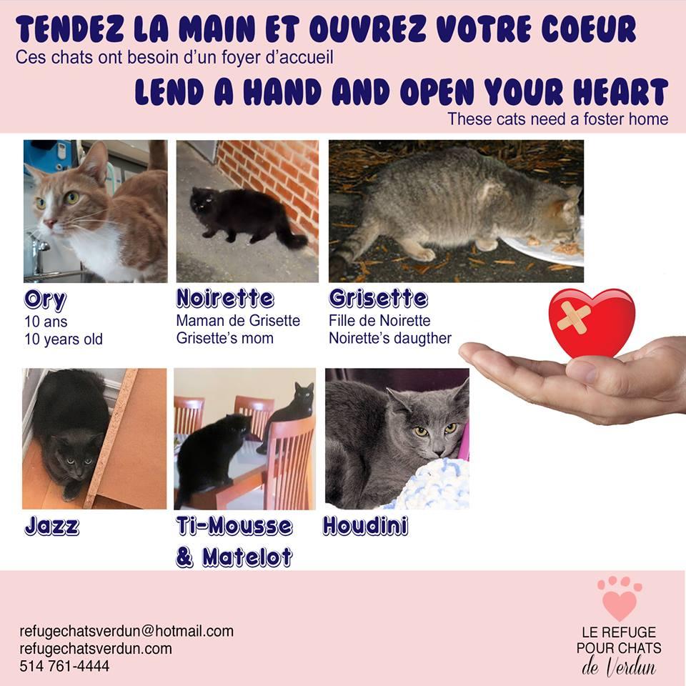 Pourconnaître mieux ces #chats/To knowmore about these #cats:  http://www. refugechatsverdun.com/urgences.html  &nbsp;   #Verdun #VerdunLuv #Iledessoeurs #MTL #NDG #westisland<br>http://pic.twitter.com/qeBxsHc2jp