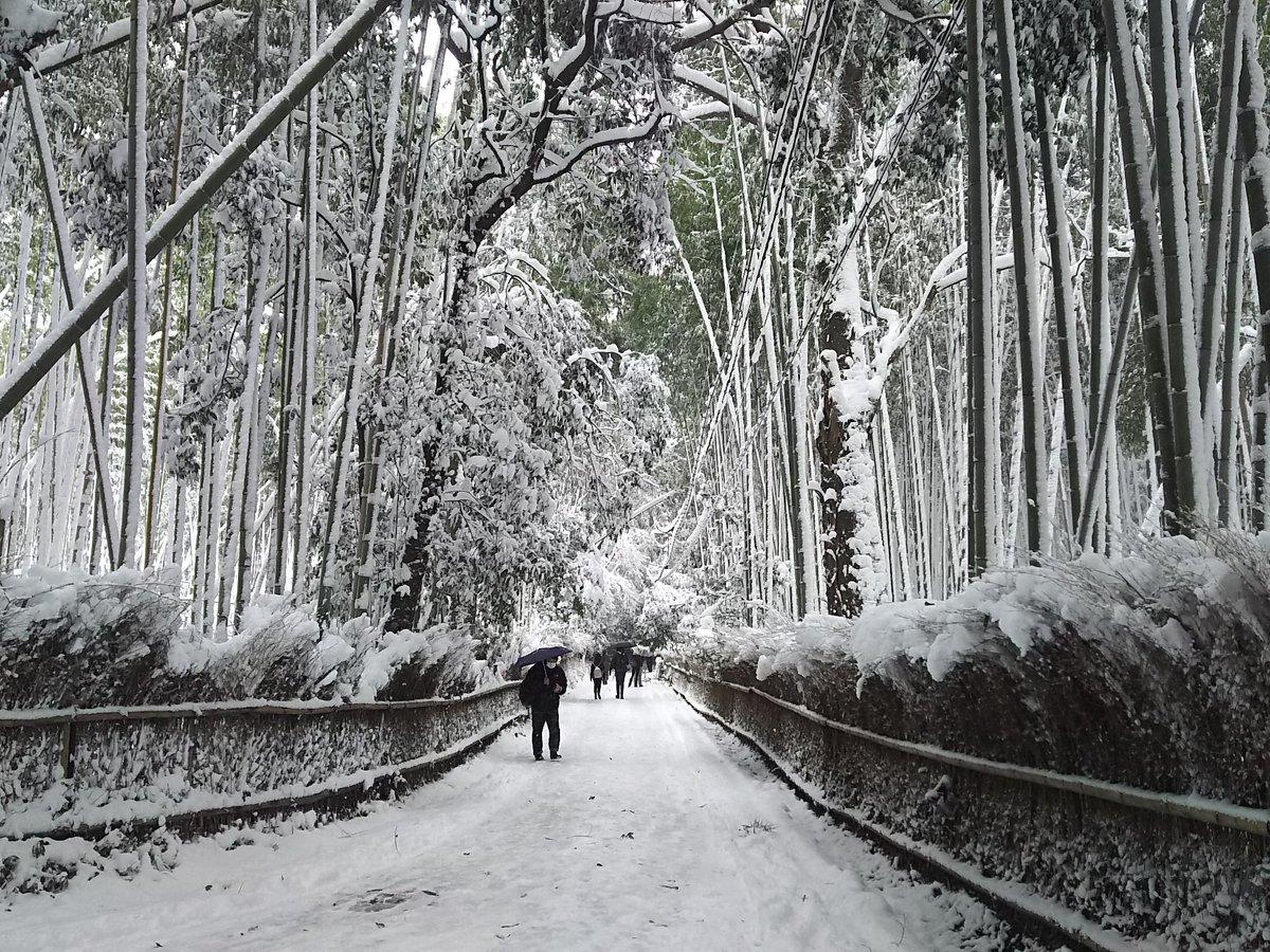 嵯峨野の竹林の小径もこの通りの雪景色。 https://t.co/j5ypTE1vB3