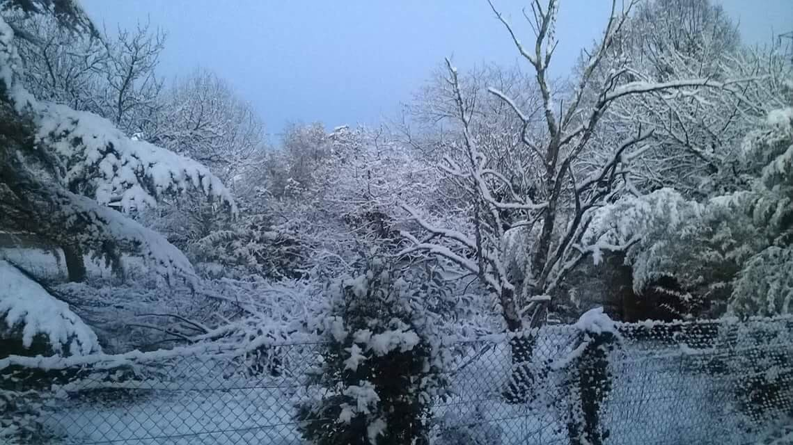 Comme anticipé sur  http:// meteolanguedoc.com  &nbsp;   hier, #neige en plaine du #Gard ce matin avec qql cms ! Photo B. LEROY près d&#39;#Ales<br>http://pic.twitter.com/MvxBg7rvP3